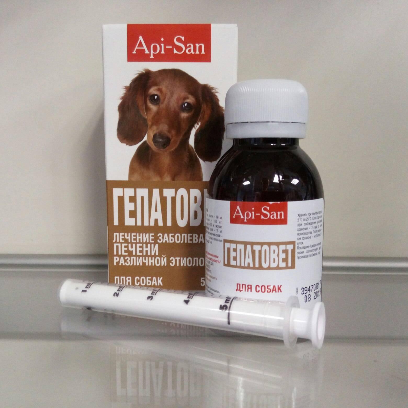 Гепатоджект для собак: инструкция и показания к применению, отзывы, цена