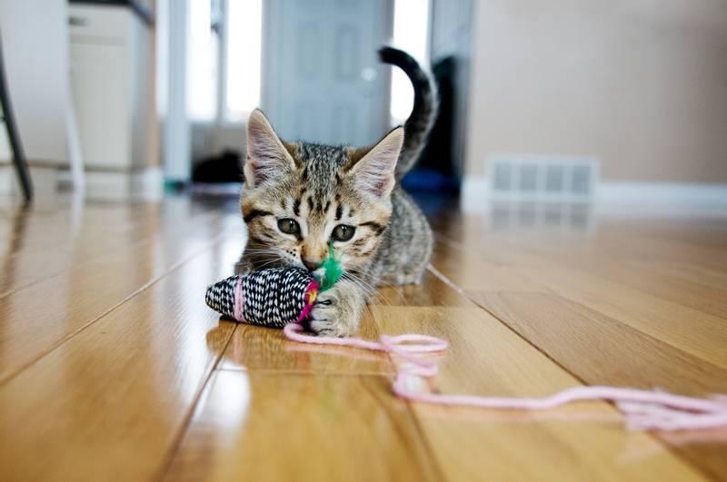 Как успокоить кошку: эффективные методы, что делать нельзя