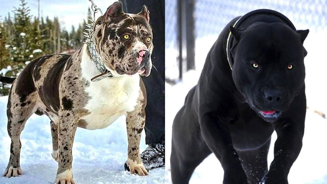 Самые опасные собаки в мире топ 10 - pet-mir.ru