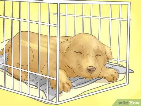 Как отучить кошку спать в постели хозяина и лазить на кровать
