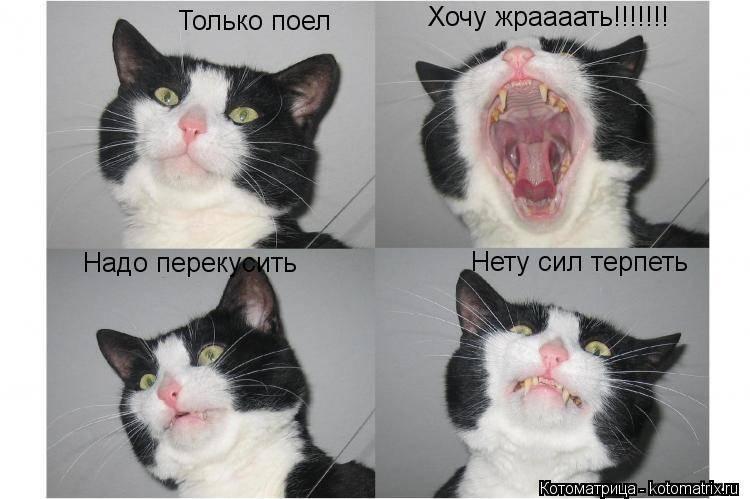 Почему кот все время мяукает?