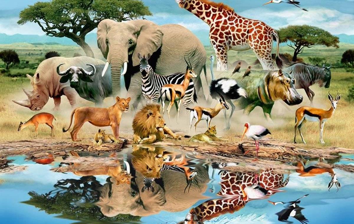 5 животных, от которых зависит жизнь всей фауны | приключения натуралиста | яндекс дзен