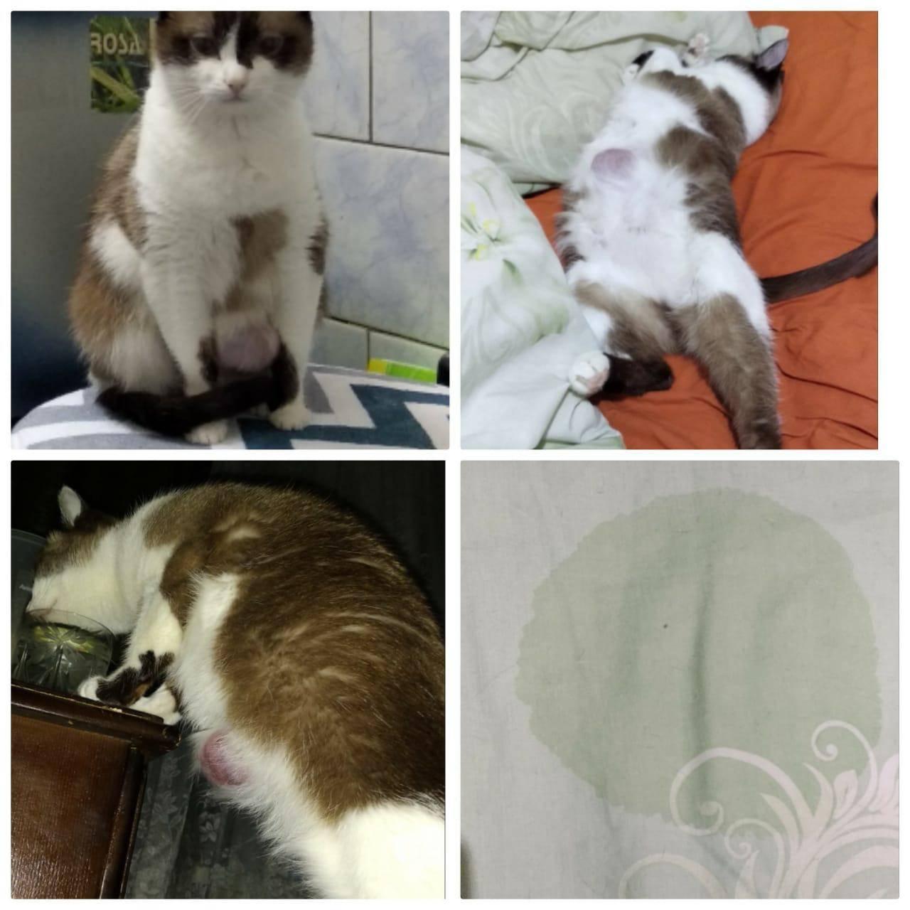 Хпн: три страшных буквы для вашего котика