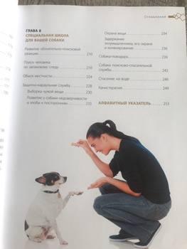 Почему любых собак нужно воспитывать икак правильно это делать? отвечает кинолог — нож