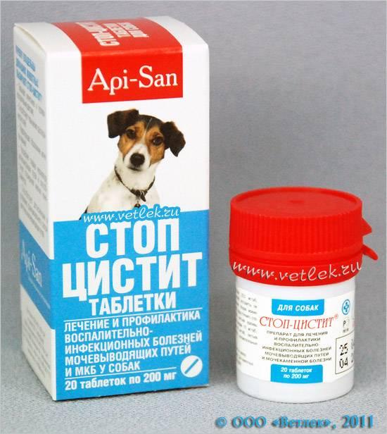 Цистит у собаки, его признаки, лечение и профилактика