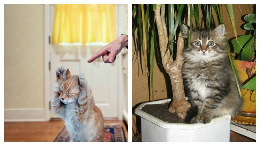 Как кошку отучить грызть провода?