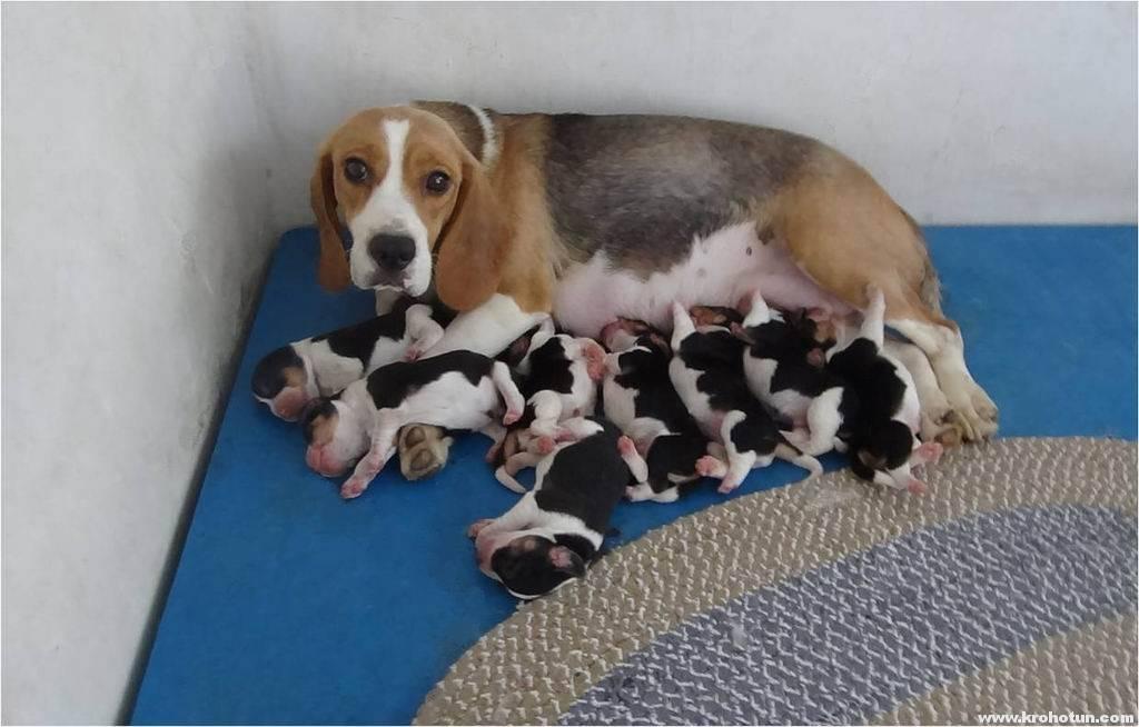 Когда можно забирать щенка домой