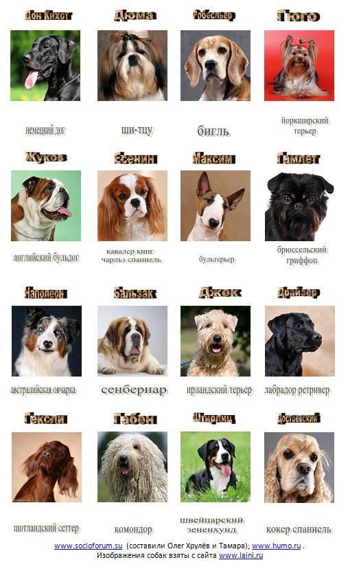 Средние собаки – отнюдь не посредственности