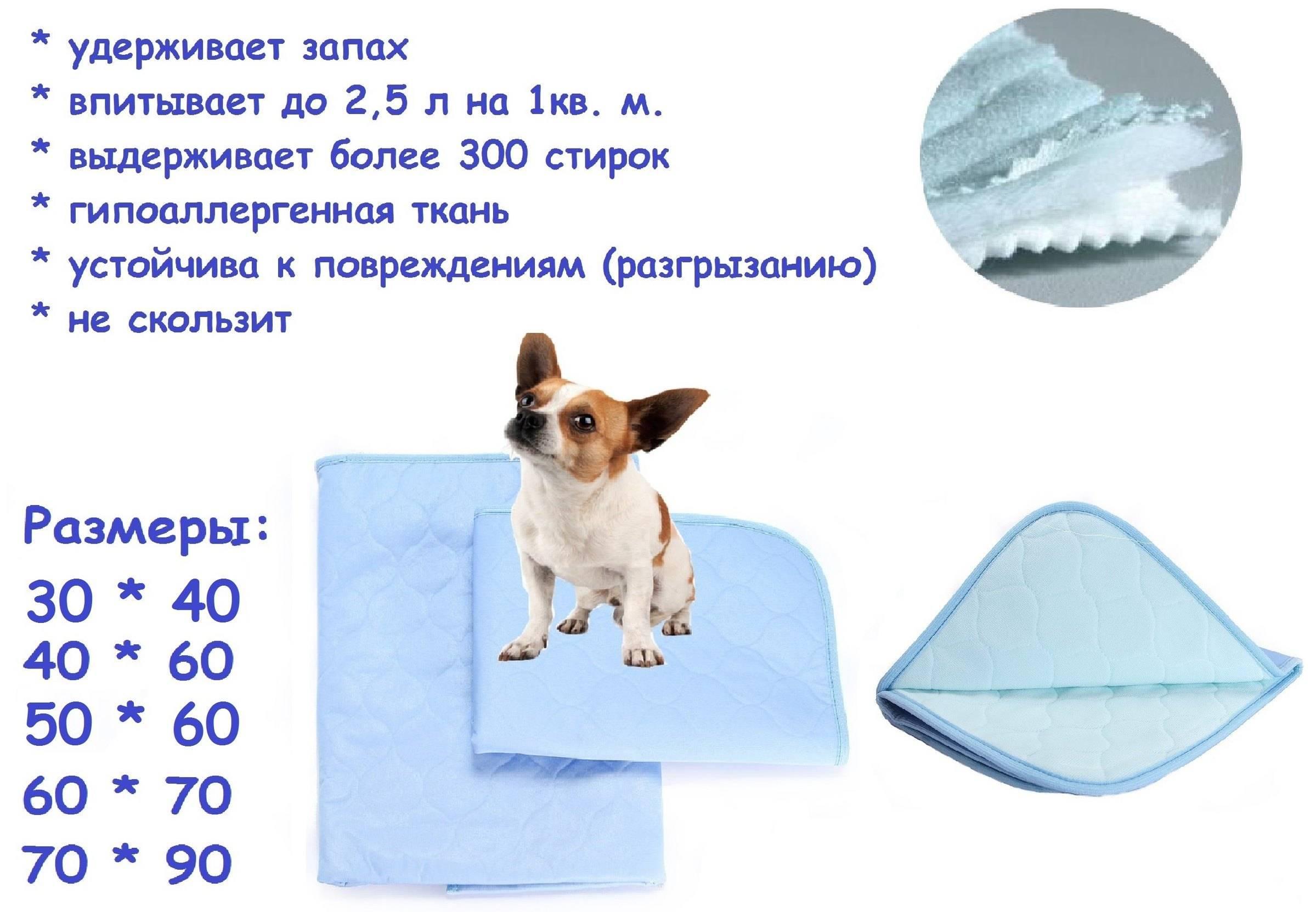 Пеленки для собак: преимущества, виды и особенности использования
