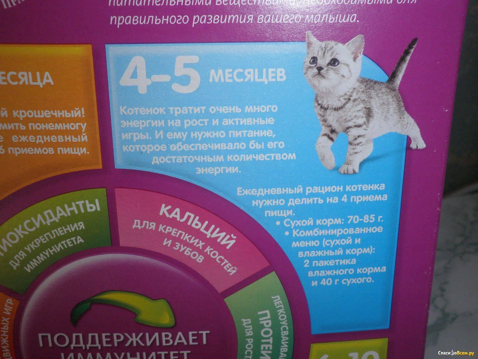 Чем кормить котенка от 1 до 3 месяцев? можно ли давать ему сухой корм? сколько раз в день кормить месячного и двухмесячного котенка?