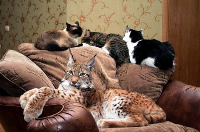 Какую кошку лучше завести в квартире: критерии выбора