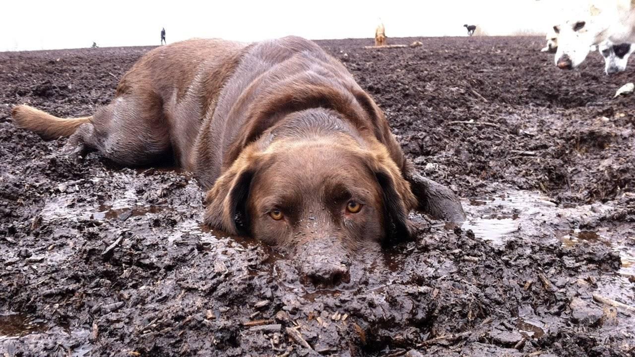 Почему собаки валяются в тухлятине и экскрементах - причины, как отучить - домашние наши друзья