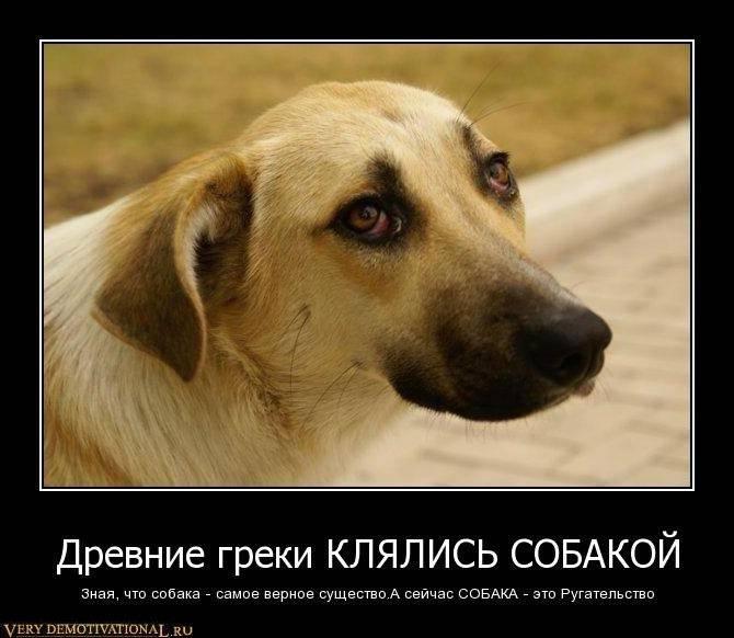 Почему собака лучший друг человека? настоящие причины