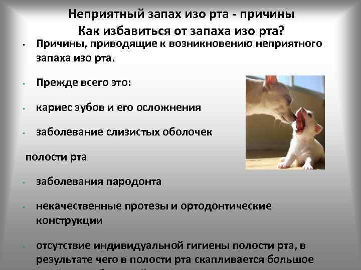 Неприятный, гнилостный запах изо рта у кошки: причины и лечение.