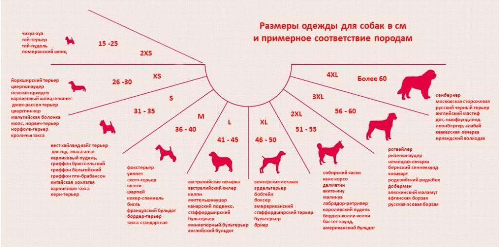 Сколько живут лабрадоры в домашних условиях, уход и содержание в квартире