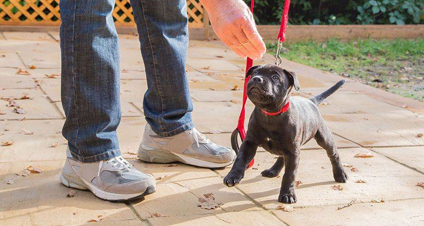 Как самостоятельно и быстро научить собаку не тянуть поводок на прогулке