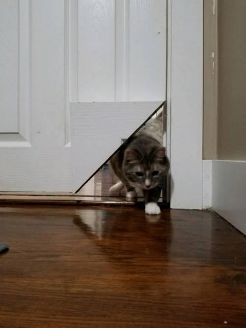 Дверь для кошки: виды и их изготовление