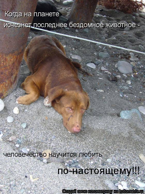 Как помочь уличному щенку
