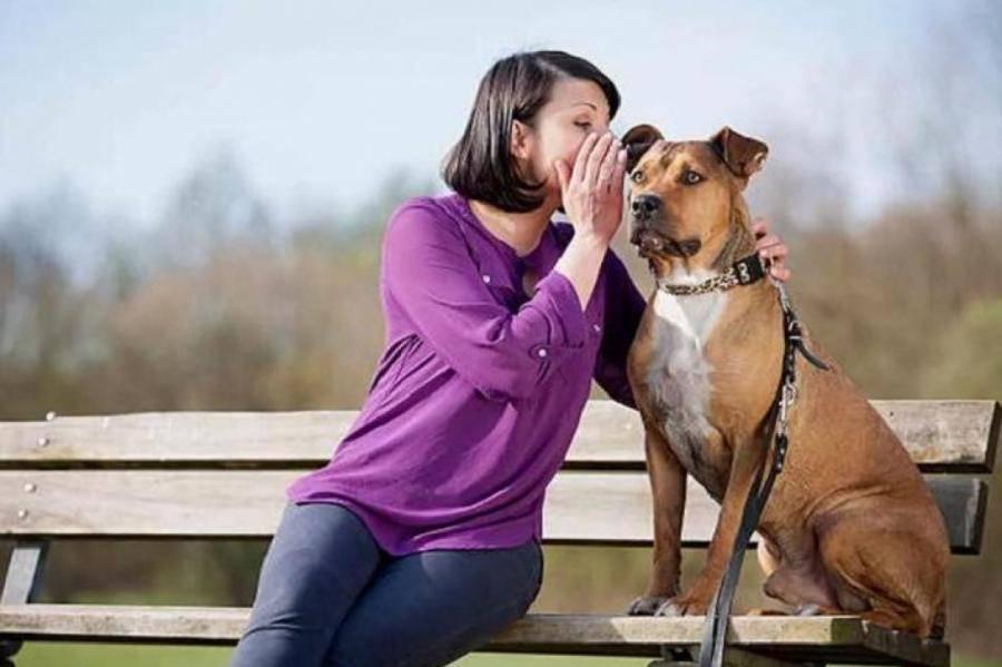 Как понять, чего хочет ваша собака - wikihow