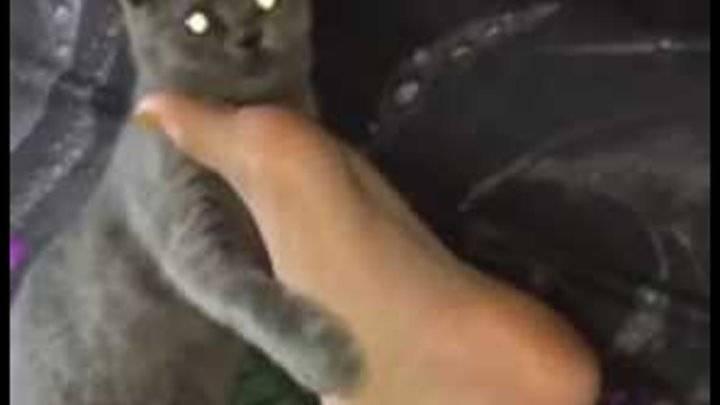 Зачем китайцы нюхают котов: чем опасно и как это правильно делать. интересные факты о кошках
