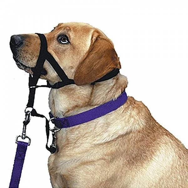 Для чего нужен ошейник удавка для собак?