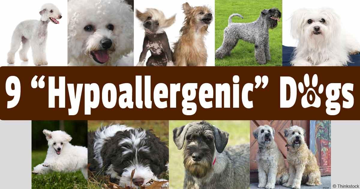 Гипоаллергенные корма для собак: рейтинг лучших производителей