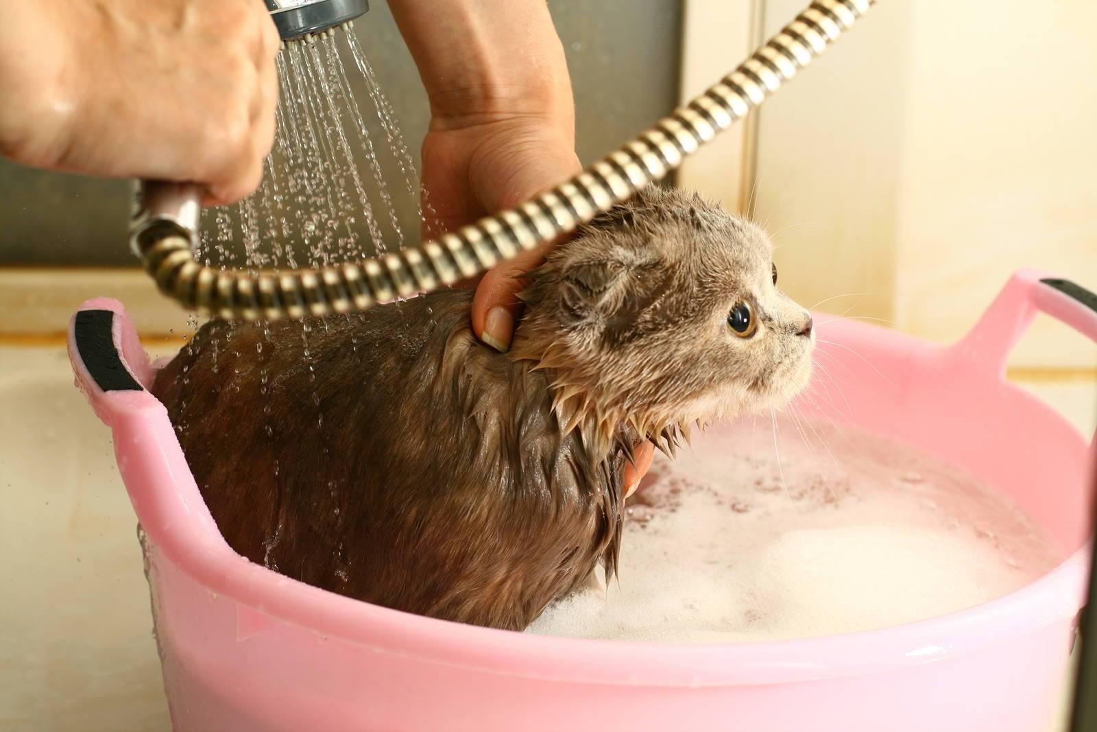 Можно ли купать кролика и как это правильно делать?