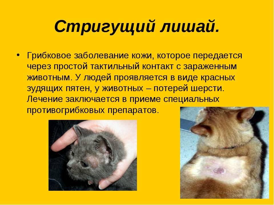 Болезни глаз у кошек и собак