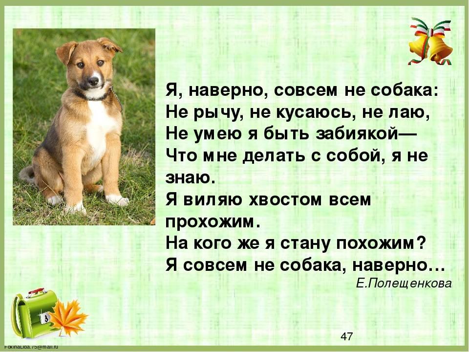 Собака рычит на хозяина: причины, факты, статистика