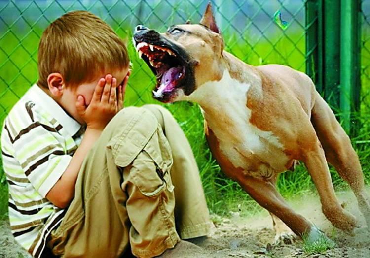 Собака рычит на хозяина: почему и что делать?