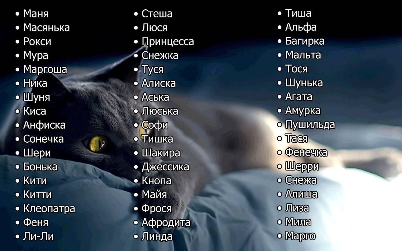 Имена для кошек девочек и мальчиков: как можно назвать легко и красиво