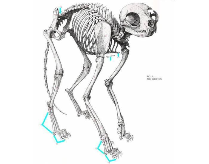 Карташев н.н., соколов в.е., шилов и.а. практикум по зоологии позвоночных. тема 20. скелет млекопитающего - электронная биологическая библиотека
