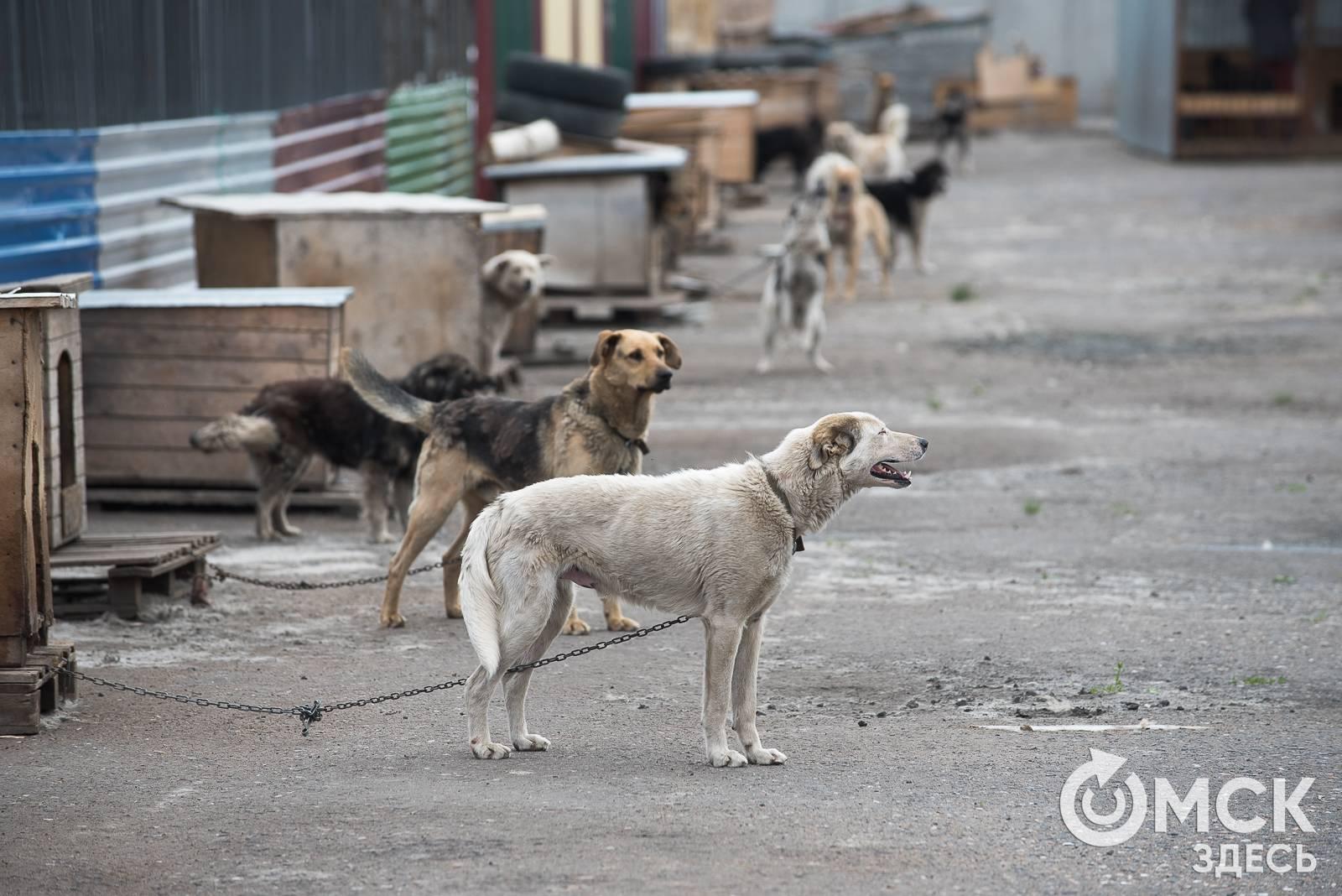 Бездомные собаки получат землю - парламентская газета