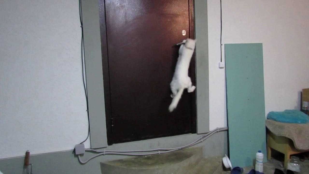 ᐉ кошка постоянно открывает дверь. что делать? - ➡ motildazoo.ru
