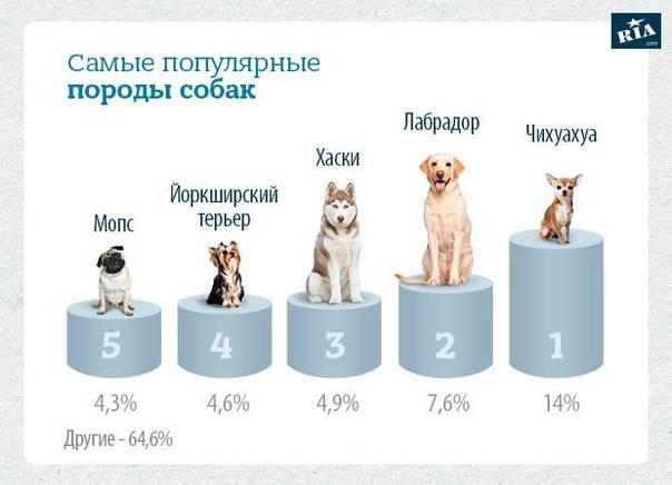 Топ 10 самые маленькие породы собак в мире - лучшие топ 10