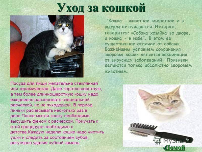 Ангорская кошка - описание и стандарт пород, окрасы и тип шерсти, особенности поведения и воспитания