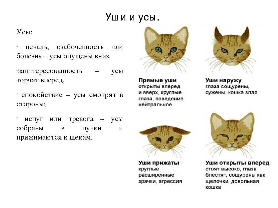 Усы у кошки как называются: назначение, строение, проблемы