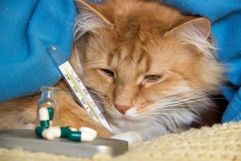 Вирусная лейкемия (лейкоз) у кошек. симптомы, диагностика, лечение вирусного лейкоза кошек