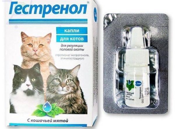 """""""адвокат"""" - капли для кошек от блох: инструкция, отзывы"""
