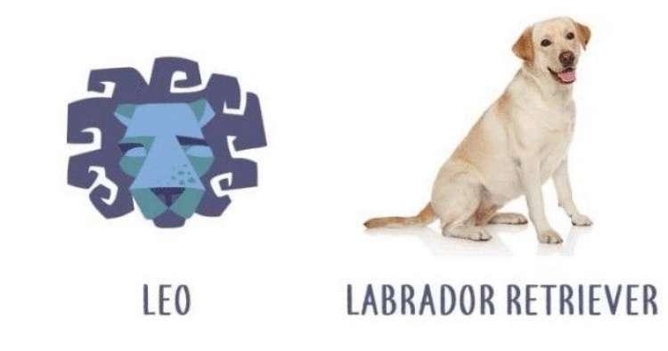 Какая порода собак подходит вам по знаку зодиака