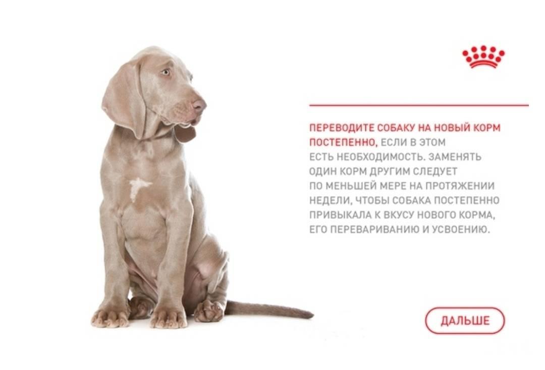 Сколько сухого корма давать собаке в день: расчеты по весу и таблица
