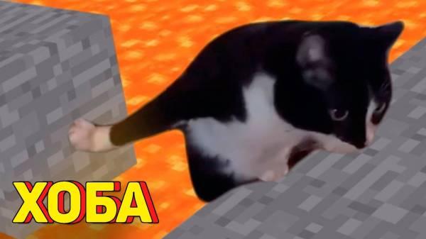 Смешные истории про котов и кошек: до слез, видео