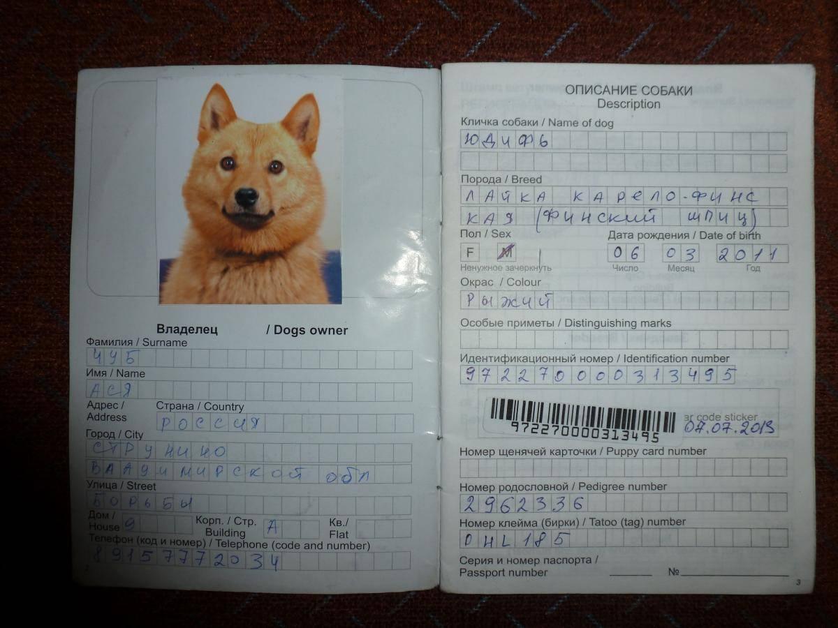 Ветеринарный паспорт для кошки, собаки: сделать в москве - срочно получить международный ветпаспорт на дому