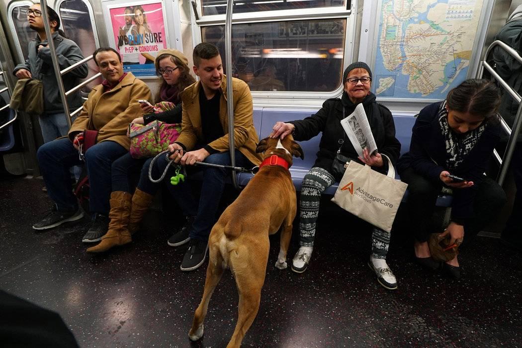 Правила перевозки собак в автобусе