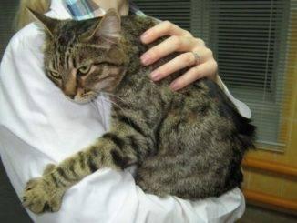 Болезни желудка и кишечника у кошек - что нужно знать владельцу