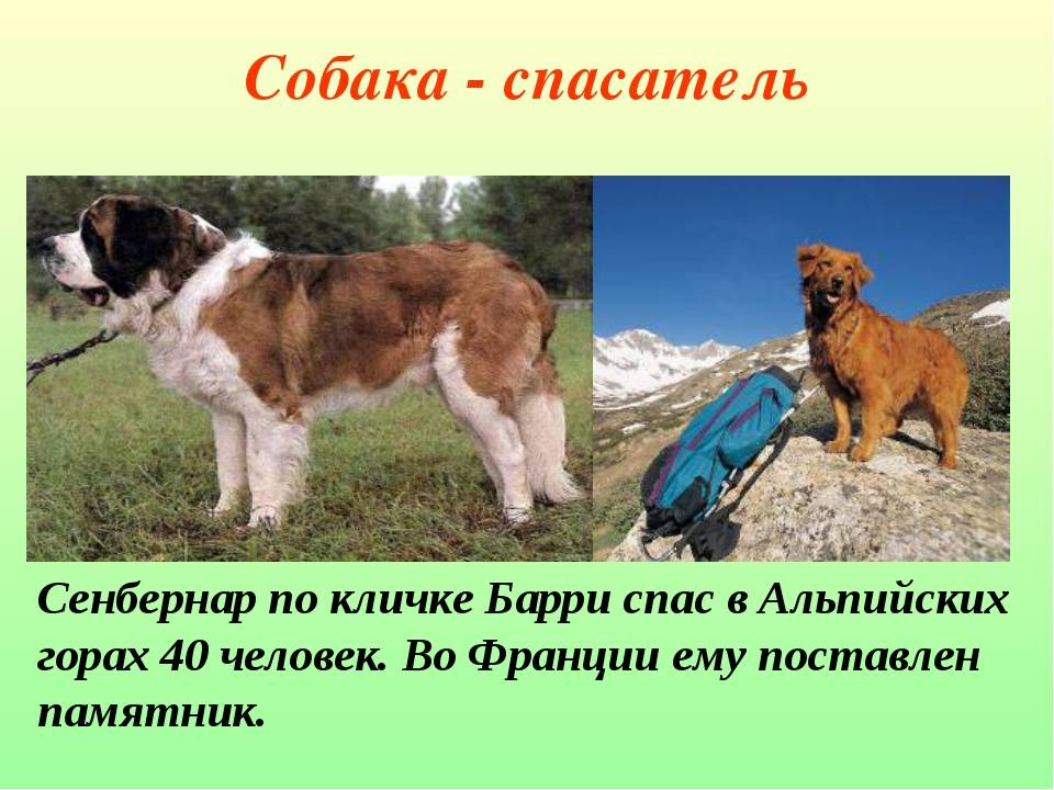 О лавинной подготовке собак. — risk.ru