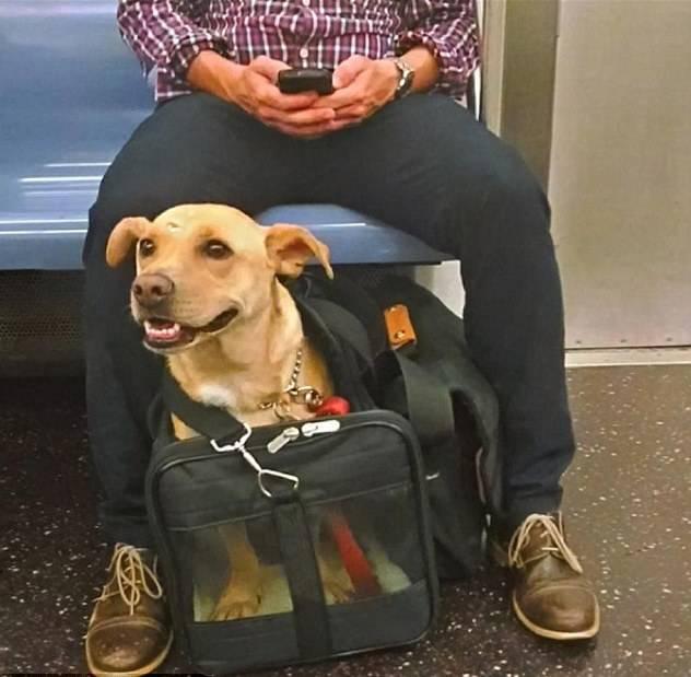 ᐉ правила провоза собаки в метро - ➡ motildazoo.ru
