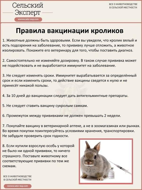 20 бизнес-идей для любителей животных