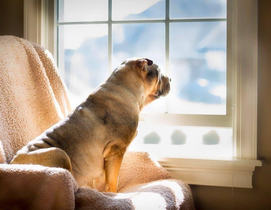 10 самых спокойных пород собак