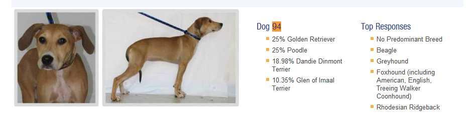 Как можно определить породу собаки?